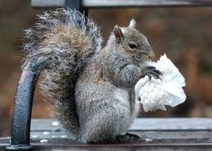 Squirrel_City
